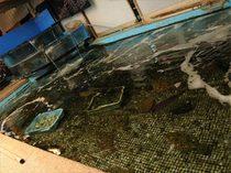 大きな生け簀にそろえられた、多種多様の魚介類