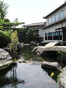 店舗横手にある池では、大きな錦鯉がゆったりと