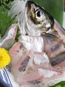 新鮮な海の幸を惜しみなく使ったお料理の数々