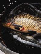 鮮度を保つため活魚を使用します