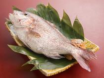 事前相談で希望の調理法にも対応。鯛なら姿焼きや浜焼きもOK