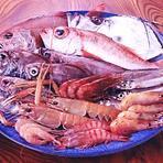 戸田港に水揚げされた深海魚