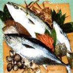 取れ立て鮮魚