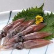 市場にはほとんど出回らない珍しい魚や旬の魚介類からひとつピックアップし、期間限定メニューとしてご提供。ピックアップした魚介に合う希少地酒もご用意しております。