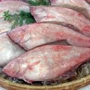 皮にあるカレイ特有の臭みが薄く食べやすい。 カレイのなかでも重要なもので、栄養満点!人気の魚。
