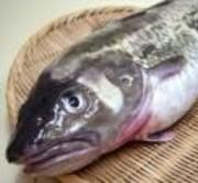 あっさりとした旨味のある魚。 タラの身肉は比較的弾力性があり、鮮度の良いものは食感もいい。