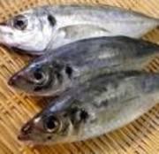 炙りも美味! 840円 全国的には年間を通じてうまい。 クセのない白身で、旨みが強く栄養価が高い魚。