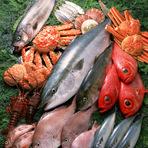 地元で獲れた旬の魚をはじめ、朝じめの鮮度のいいものを使用