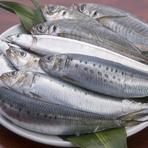 四季の移ろいにあわせて、旬の魚介がいつでも賑わう