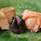 『蒸しあわび』は最高級の鮑が職人の技で格別の極み