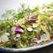 三浦野菜や旬の春野菜たっぷり!ディナーバイキング