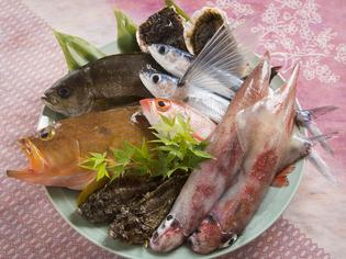 近海で獲れた新鮮な旬の魚をご提供