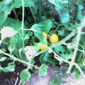 最高級黒毛和牛や自家栽培の無添加、無農薬野菜が美味しいです。