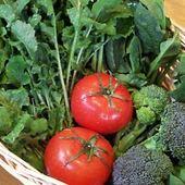 自家栽培の野菜をたっぷりと
