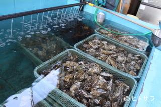 マル源水産(食べ放題・バイキングあり、三重県)の画像