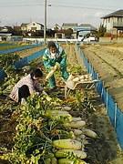 『肥料はやらずに自然界と同じになれば、収量が少なくとも未来永劫、土は生き続ける』と、農家さんは言う。