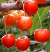 農家さんの絶対的な『こだわり』で、農薬はほとんど使用していないから安心してお召し上がり頂けます。