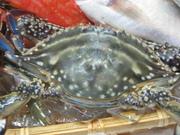 値段はもちろん国産のほうが格段に高いが、味もあきらかによい。浜名湖は真蛸の良質な漁獲地なのである。