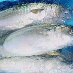 当店で扱う魚貝類はすべて天然ものの為・・・・