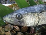 東京湾を回遊し、初夏や秋にビシ仕掛けで釣る。このサバは非常に数が少なく、関さば以上に高価になることも