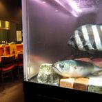 店内の中程にある水槽は活きの良い魚介類が泳いでいます