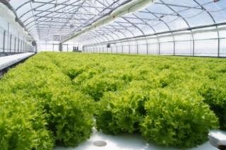 歌志内市『歌志内ファーム』の葉物野菜を使用