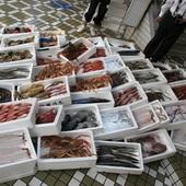 その日仕入れた新鮮な魚貝類多数御用意しております。