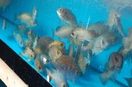 豊島を中心に瀬戸内海の魚を心ゆくまでお愉しみ下さい