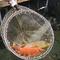 お客様が食べたい魚を生簀から選べられます。