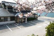 台場公園の桜、まもなく開花!