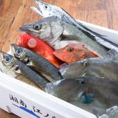 湘南で水揚げされた鮮魚、全国から直送された旬の魚介を使用