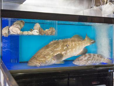 「幻の魚」を堪能できる『クエ鍋』