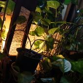 心落ち着く店内の植物