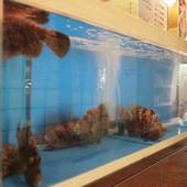 地元で捕れた新鮮な天然魚たちが泳いでいます。