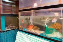 店内の生簀に泳ぐ魚をその場で調理してくれる