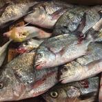 1998年9月以来、市場に通い、それぞれ季節の新鮮な魚介類を、仕入れています。
