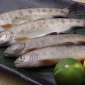 料理人が釣った『ヤマベ』は、丸ごと食べられる唐揚げで!