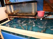 活魚料理の店 水月