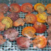 ヒォゥギのカラフルな殻が子供に大人気です!!