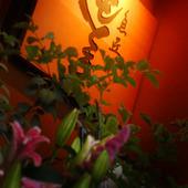 京都・桂の隠れ家で愉しむ旬の味!