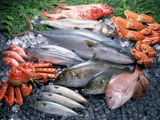 瀬戸内海からから届く天然魚、旬に合わせた日本各地の逸品