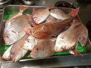 今の季節は、青魚。 いわし、アジ、カマスなどなど・・・ カマ焼きなどもあります。
