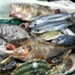 北三陸・普代からの産直鮮魚も再開です。