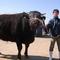 小川牧場で育てた長崎黒毛和牛