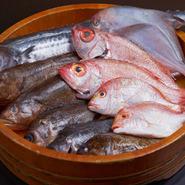 毎日仕入れる、旬な地魚と地魚を中心にした海鮮料理。山口の海の幸がいっぱいです。