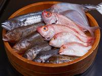 旬な地魚と水槽の活魚