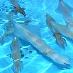 イカの生簀