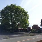 シンボルの『大きな木』です
