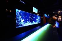 大型水槽には漂う魚たち。幻想的な世界に見とれる事も…