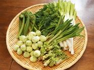 春が旬、定番から珍しいものまで『山菜』